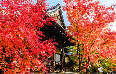 秋の特別拝観